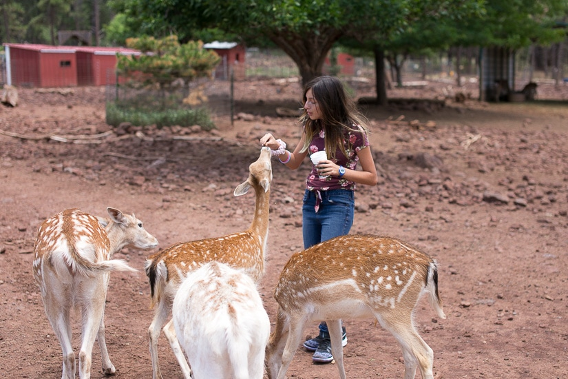 Deer Farm in Williams, Arizona